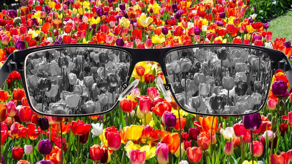 Ryškios gėlės pilkame fone žiūrint per akinius